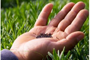 Seed-to-Seal-Mini-Seed